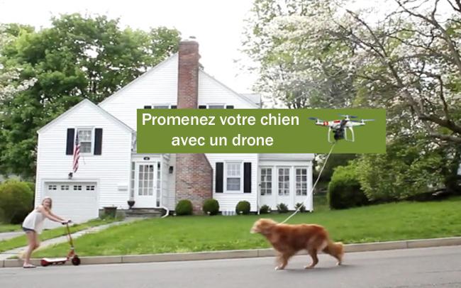 votre chien en 3d