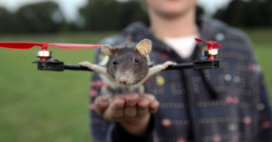 ratcoptere