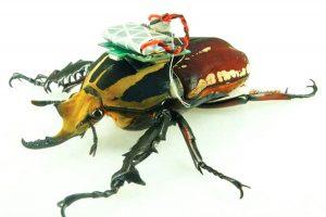 Drone scarabée